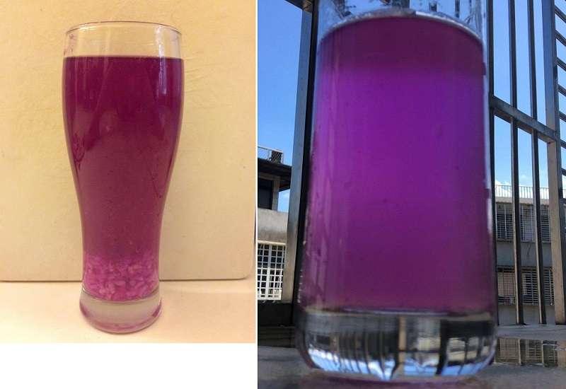03經典水果釀紅龍果+糯米酒釀(左)。紅龍果是我最喜愛的釀酒水果,酒色太美了,就連洗杯子的水,都那麼妖豔(右)。(寇延丁提供)