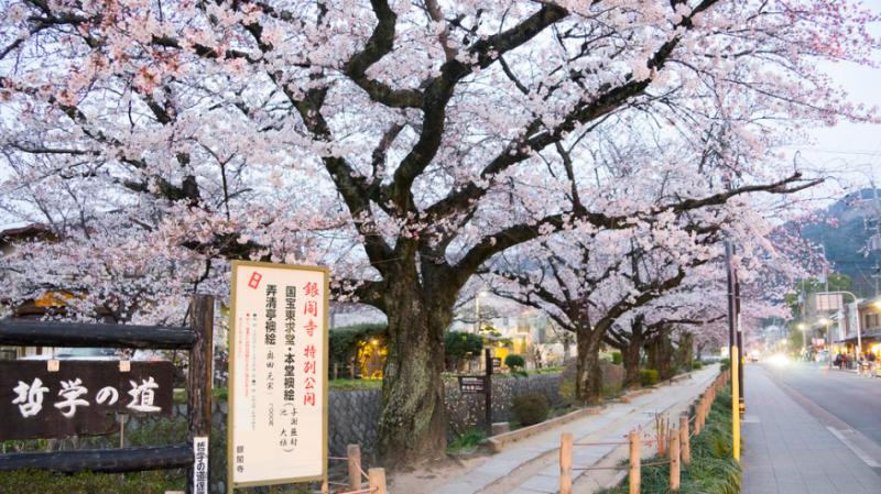 前往銀閣寺前,會先經過這條長2公里的哲學之道,是以前京都大學教授西田幾多郎都在這裡冥想而得此名。(圖/ Perry Li@Flickr,FunTime提供)