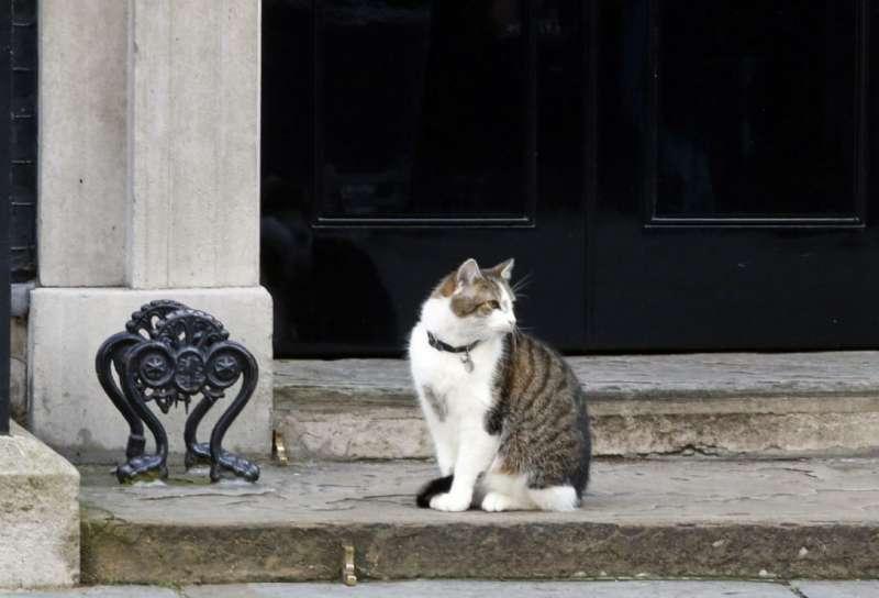 英國首相官邸「捕鼠長」賴瑞。(美聯社)