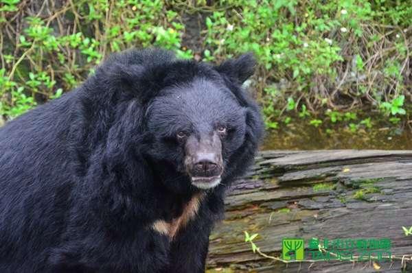 小熊(圖/取自台北市立動物園官網)
