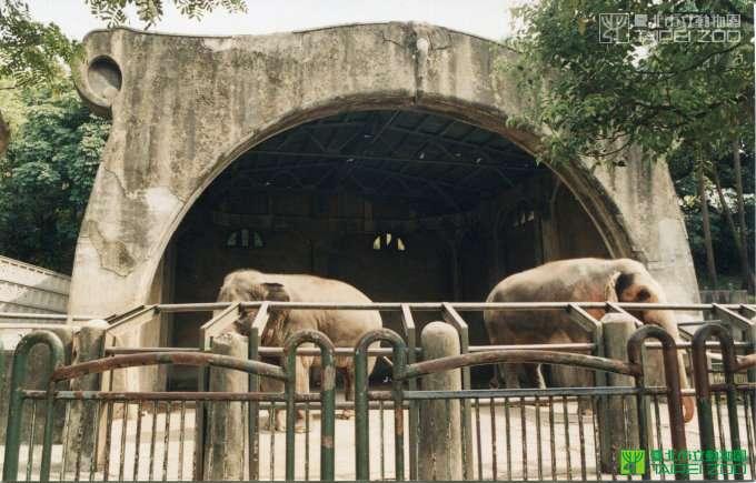 林旺馬蘭(圖/取自台北市立動物園官網)