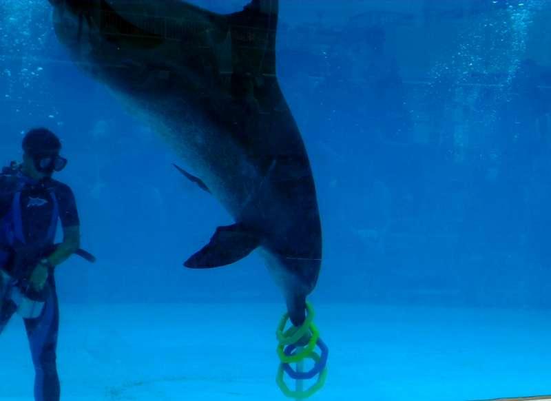 海豚被關在水族館裡逗樂人類,那牠們快樂嗎?(圖/作者提供)