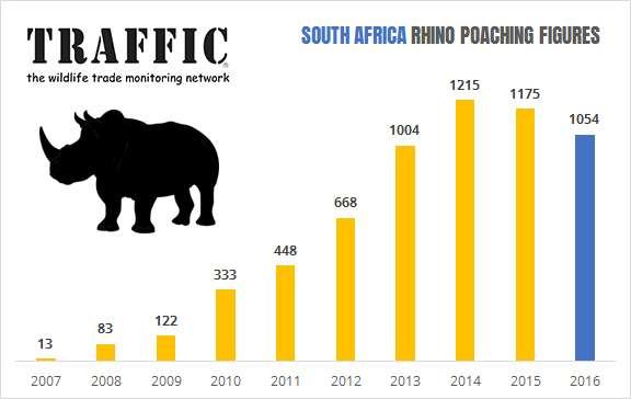 南非每年被盜獵的犀牛數量。 (圖:國際野生物貿易研究組織官方網站)