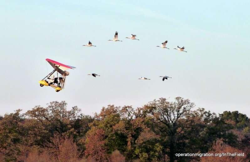 保育人員駕駛輕航機,引領鶴群南非度冬。 (取自Operation Migration)