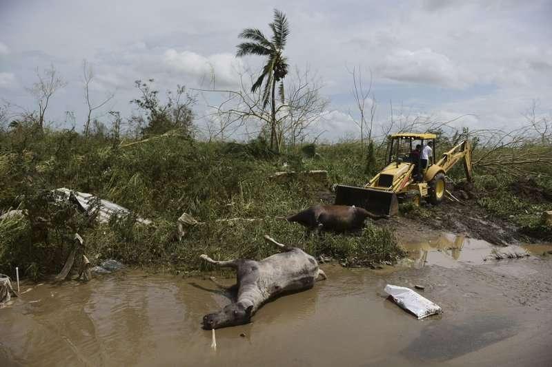 颶風重創波多黎各,災後景象令人心驚。 (美聯社)