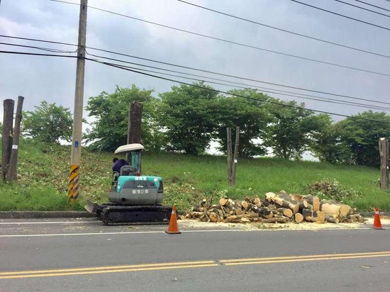 為防止樹木在颱風來襲時絞斷電線,台29線高屏溪沿岸的黑板樹,近來被強砍成「平頭」,引發中央公園護樹護地聯盟批評。(取自中央公園護樹護地聯盟臉書)