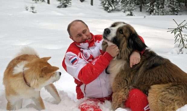 普京與寵物犬「巴菲」(右)、「夢」在雪地玩耍。(美聯社)