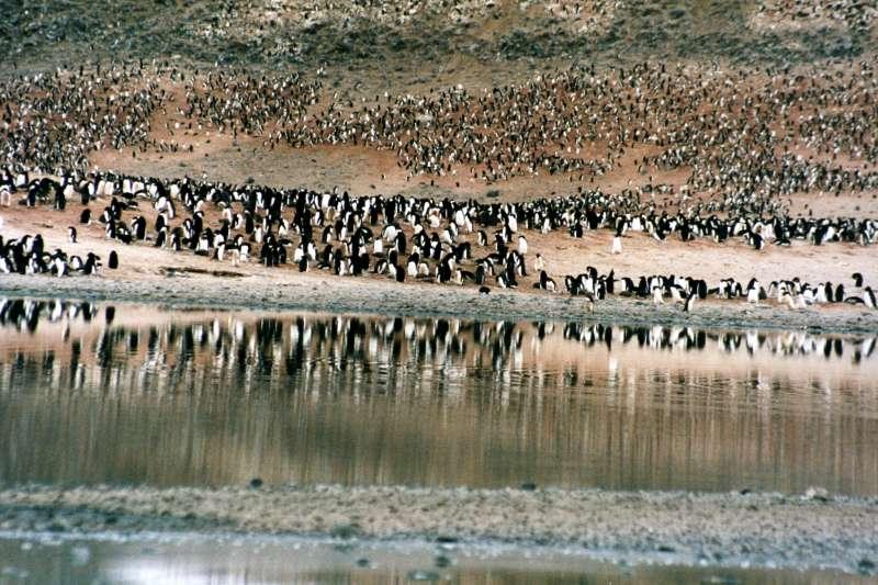 南極洲羅斯海地區一處阿德利企鵝棲地。(Brocken Inaglory@Wikipedia / CC BY-SA 3.0)