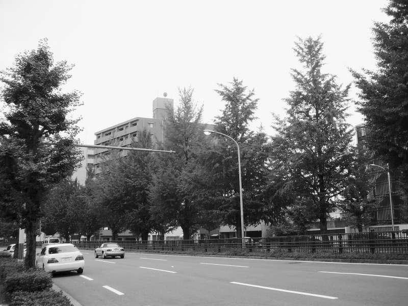 堀川通的銀杏(圖/時報出版提供)