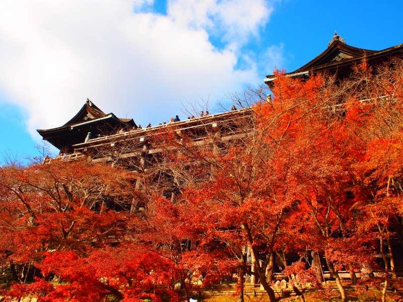 清水寺的紅葉,每年吸引許多人朝聖,但你知道這附近還有個不為人知的秘境嗎?(圖/minato kaidou@Flickr)