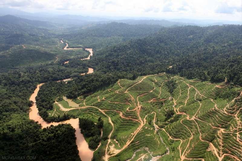 印尼熱帶雨林遭大肆濫砍,以開闢經濟價值高的油棕田。(圖取自「拒絕棕櫚油」[Say No to Palm Oil]網站)