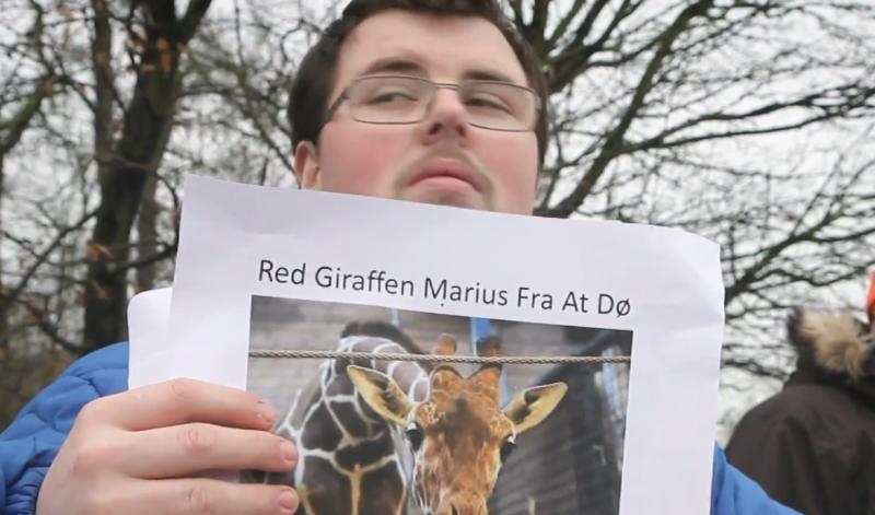 哥本哈根動物園的長頸鹿被宰殺的消息傳出後,引起抗議。但看似殘酷的宰殺行為,原因其來有自。(CNEX 提供)