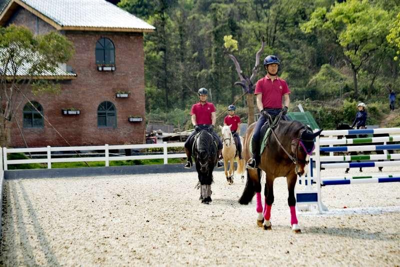 horse-2697579_1920.jpg