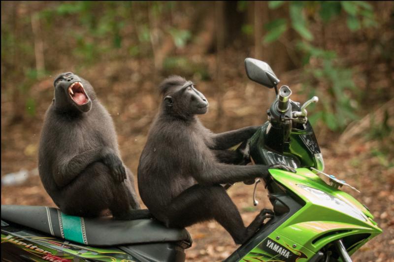 (圖/Comedy Wildlife Photography Awards官網)