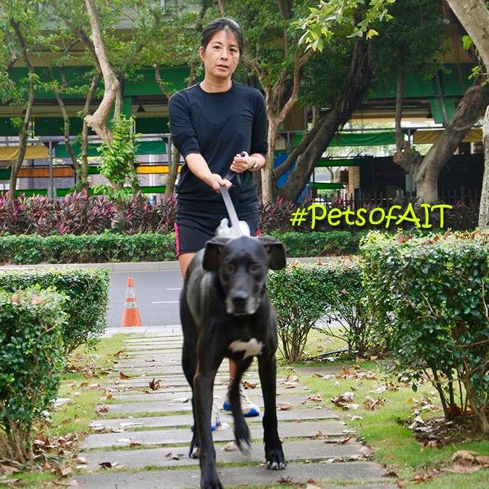 20171222- AIT寵物系列–黑色大丹犬Hope(希望)。(取自美國在台協會網站)
