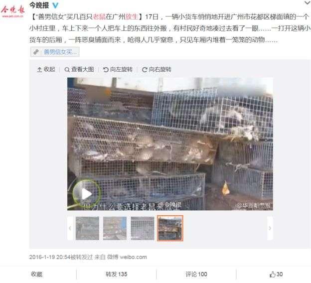 有評論形容放生老鼠不是「放生」,是「放害」。(BBC中文網)