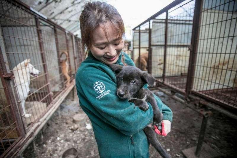 動保團體志工從南韓狗肉農場救出小狗。(圖/Human Society International粉專)