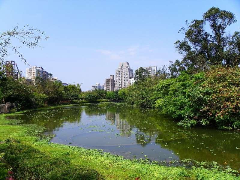 圖中為大安森林公園中的生態池。(玄史生@維基百科/CC BY-SA 3.0)
