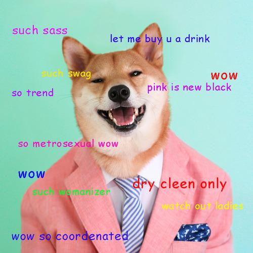 網路世界一張張「柴犬表情包(Doge Meme)」,成為狗狗幣誕生的來源。(圖/Alison Groves@flickr)