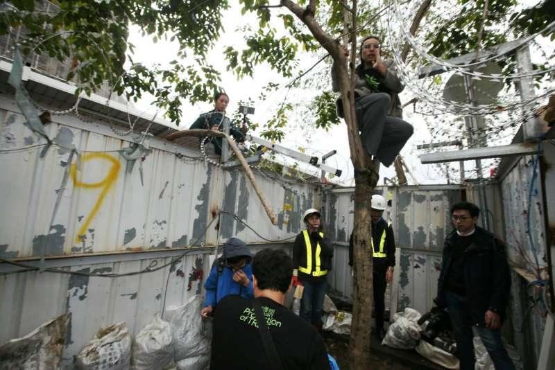 2018-01-22-遠雄開挖大巨蛋旁的33棵行道樹,松菸護樹團最後抗議04。(陳明仁攝)