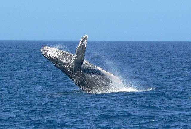 乘坐高速汽艇,感受飛濺的浪花,體會與鯨魚融為一體的感動瞬間!(圖/女子學提供)