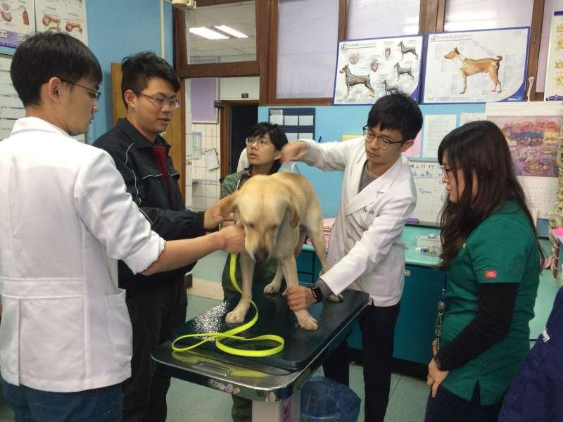 搜救犬鐵雄接受身體診斷。(取自台中市政府官網)