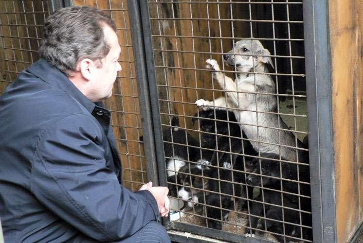 俄羅斯人不習慣領養寵物,一旦流浪犬貓被抓捕,大多會在收容所裡死去。(圖截自俄羅斯動保組織LAPA網站)