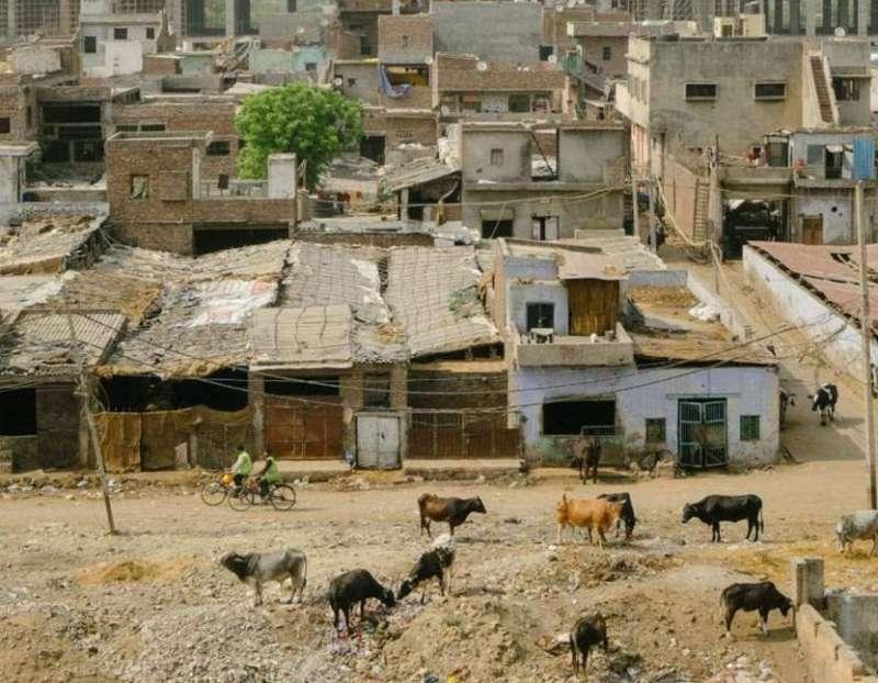 在大型建設項目和垃圾場之間,坐落著一個奶牛場。牲畜經常接觸廢物,這意味著大部分乳製品都被污染了。(圖/言人文化提供)