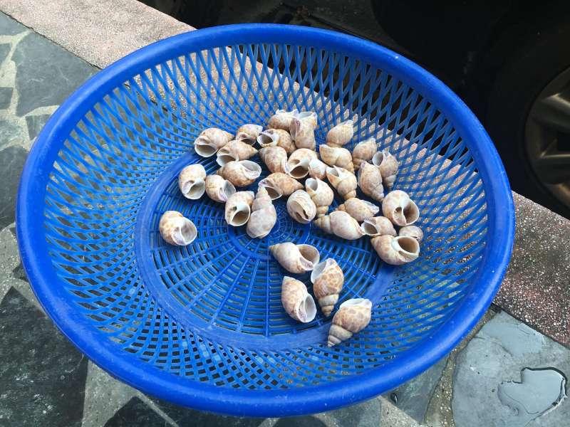 放在太陽下曝曬的貝殼,原來是陳大哥替寄居蟹準備的新家。(圖/鐘敏瑜攝)