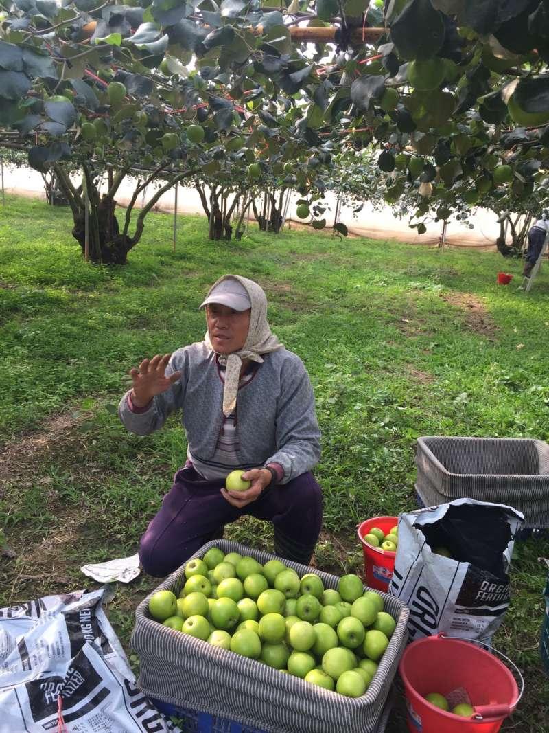台灣果農應用管理科學整合農業技術,達到環境友善的生產模式。(圖/高雄市農業局)