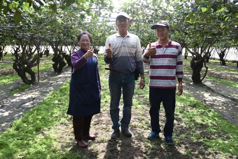 高雄蜜棗的栽植面積與產量就佔了全國43.1%,經多年品種選育並改進栽培技術讓品質不斷提升。(圖/高雄市農業局)