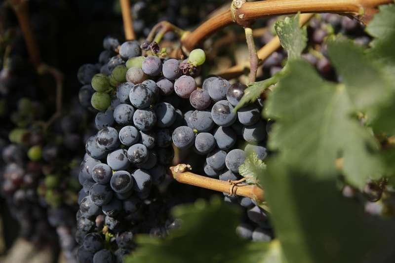 中美貿易戰開打,美國農業恐將受重創,葡萄園,葡萄酒(AP)