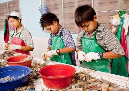 泰國龍仔厝府,緬甸兒童在蝦加工廠里工作。(圖/言人文化提供)