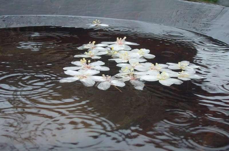 別在手臂上的小白花,意味的就生命的告別。(圖:龍應台提供)