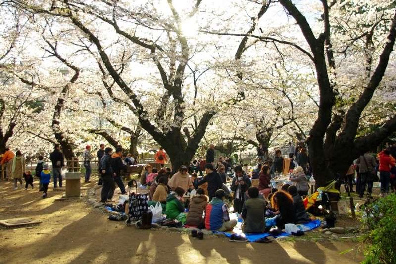 在櫻花樹下一邊賞櫻一邊野餐的日本人。(圖/陳怡秀攝影|想想論壇提供)