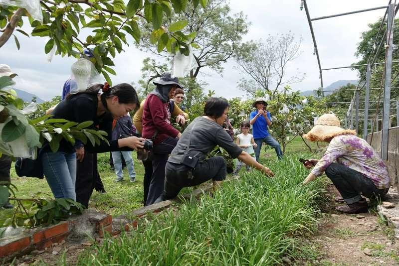 各農村社區結合在地生態環境,農業資源與特色人文,每每推出創新遊程,要讓民眾深刻感受到農村的多元樣貌及文化。(圖/高雄市政府農業局提供)