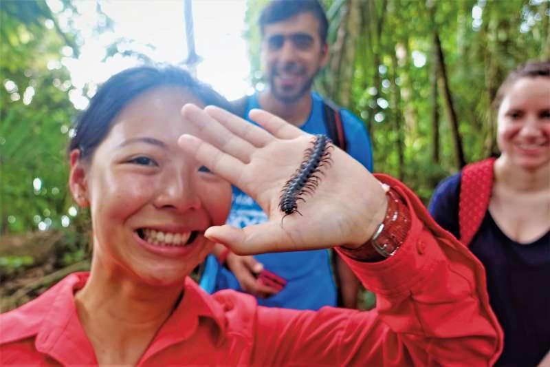 導遊在葉子上找到這隻無毒蜈蚣。(圖/山岳出版提供)