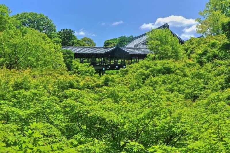 這個季節最讓人想一睹風采的就是閃著沁涼綠色光芒的青楓。 在這個觀光客較少的時期,不妨到清新「青楓」閃閃發亮的京都名所走走吧!(圖/ZEKKEI Japan)