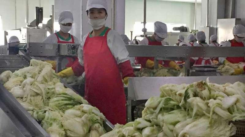 北韓首都平壤泡菜工廠的勞工(AP)