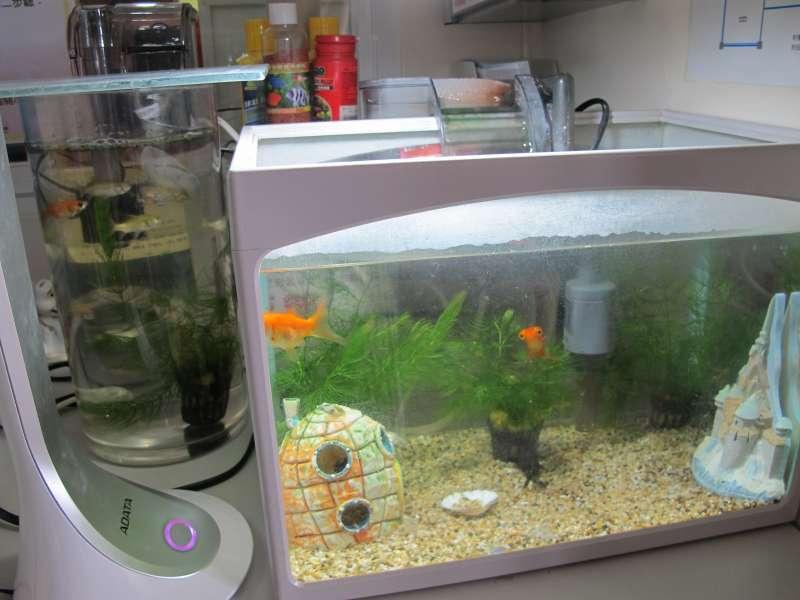 浩浩養的兩缸魚是他的新寵(圖/曹嘉真攝).jpg
