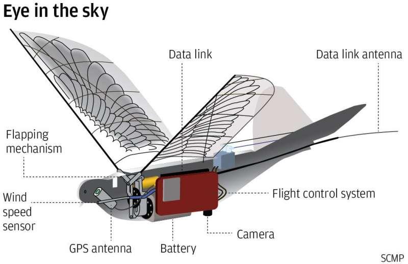 信鴿系統的內部構造。(圖/智慧機器人網提供)