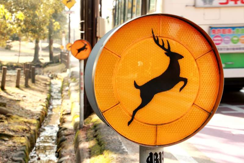 奈良車道旁隨處可見的「小心有鹿」警示。(圖/陳怡秀攝|想想論壇提供)