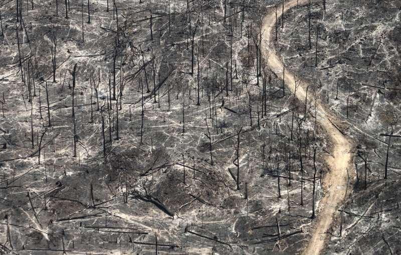 亞馬遜叢林遭過度開發(取自Survival International)