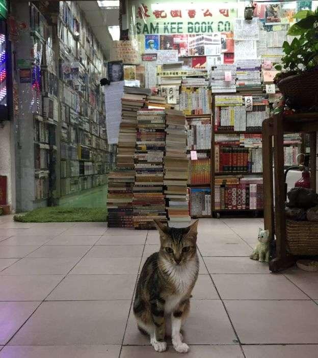 森記在2004年因為增設二手書店,有更多空間收養貓。(BBC中文網)