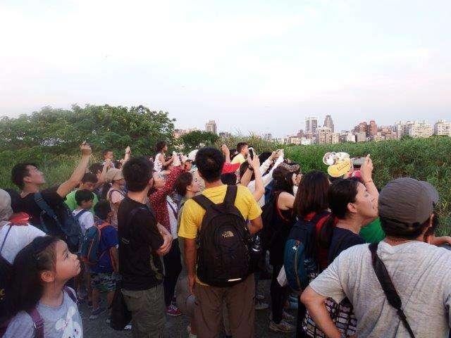 2018五股溼地夏日賞燕季推出有趣又免費的生態導覽活動。(圖/新北市政府水利局提供)