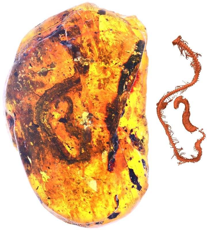 緬甸曉蛇和對應的CT重建。(新華社)