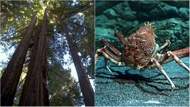 科學家的巧思,讓樹木與螃蟹也能製作出近似塑膠袋的環保材料。(圖/翻攝自 Youtube,智慧機器人網提供)