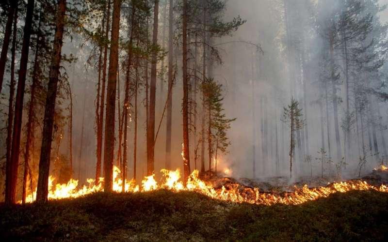 北歐瑞典今年夏天的高溫打破262年以來的紀錄,熱浪與乾旱引發多起森林野火(美聯社)