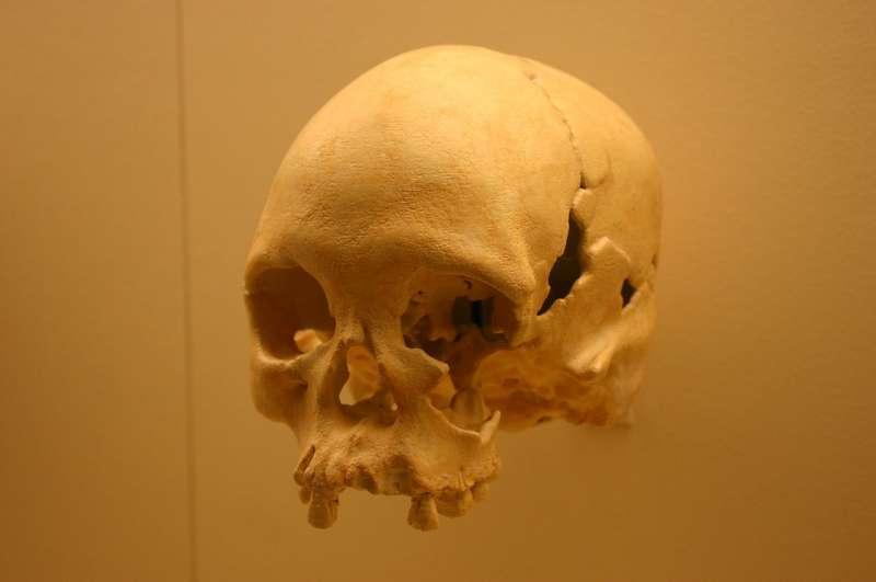 在巴西國家博物館內展出的「露西亞」是美洲最古老的人類骨骸。(取自Wikipedia)