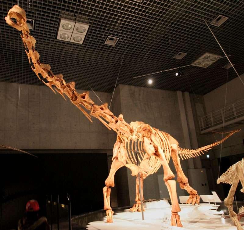 馬薩卡利神龍的骨架模型。(取自Wikipedia)